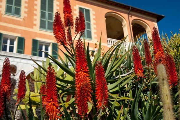 villa-hanbury-giardino